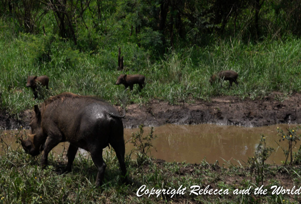 South Africa - With Tags-116