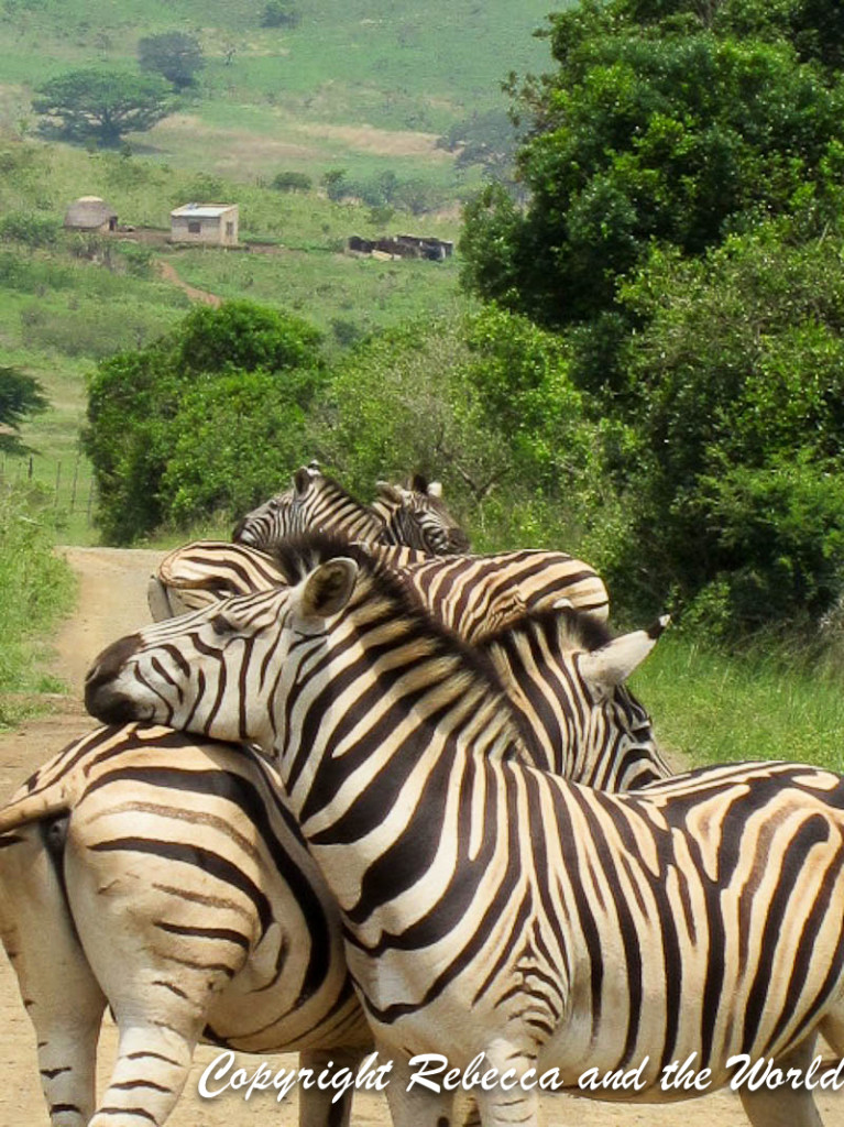 South Africa - With Tags-117