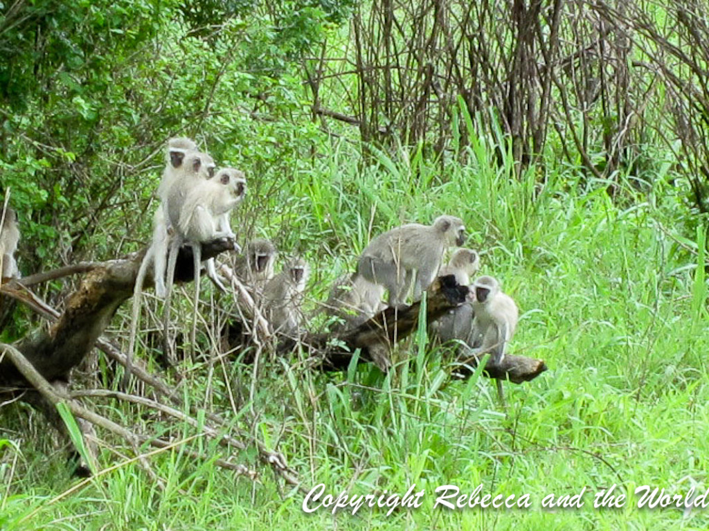 South Africa - With Tags-159