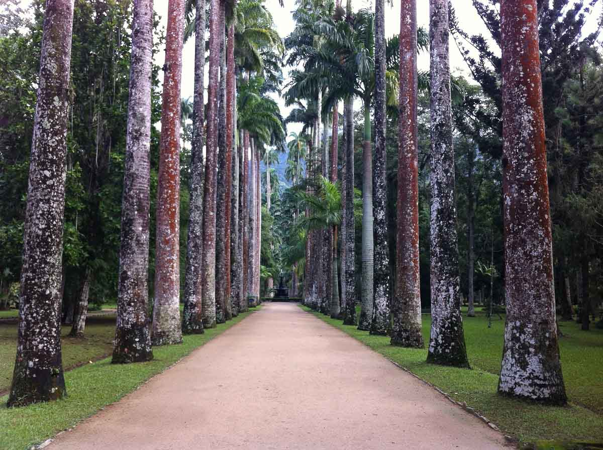 One of the Jardim Botanico's highlights is the Avenue of Royal Palms, a great photo spot in Rio de Janeiro