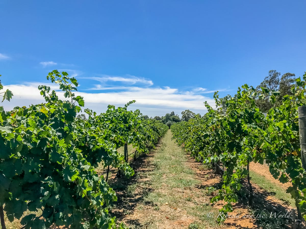 There are several wineries in Echuca and Moama that you can visit for tastings, including Morrisons Winery
