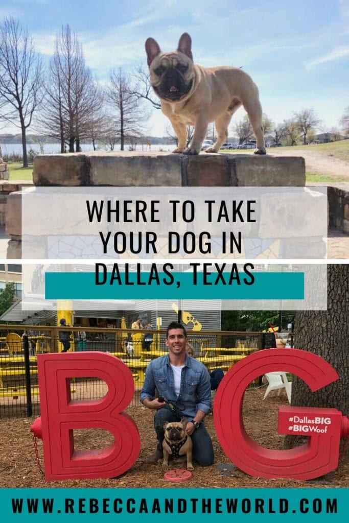 Like to take your pup everywhere with you? Here are the best dog-friendly restaurants and places in Dallas, Texas! | #dogfriendly #dallas #dallastx #texas #pets #dogs #furbaby #dallasrestaurants