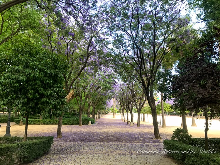 Parque de Maria Luisa is a great place to explore and escape the summer heat of Seville, Spain