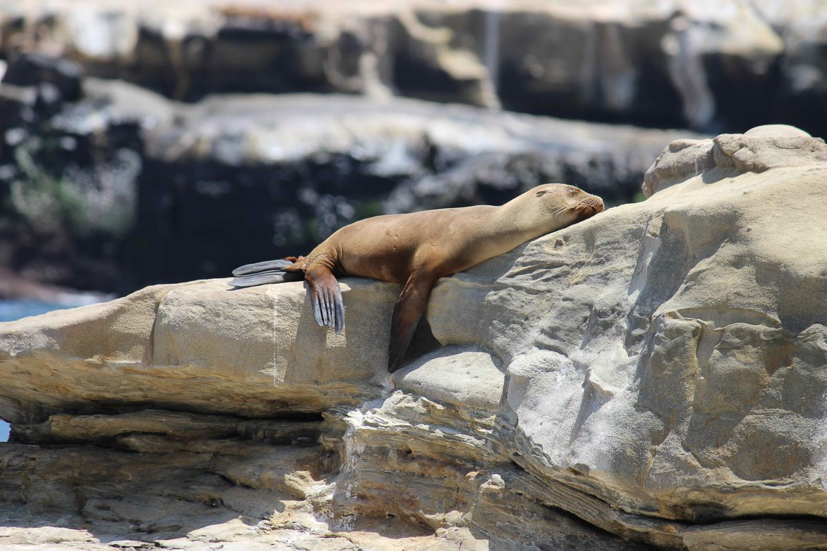 La Jolla Cove is one of the best places to visit in San Diego for beaches, marine life and food