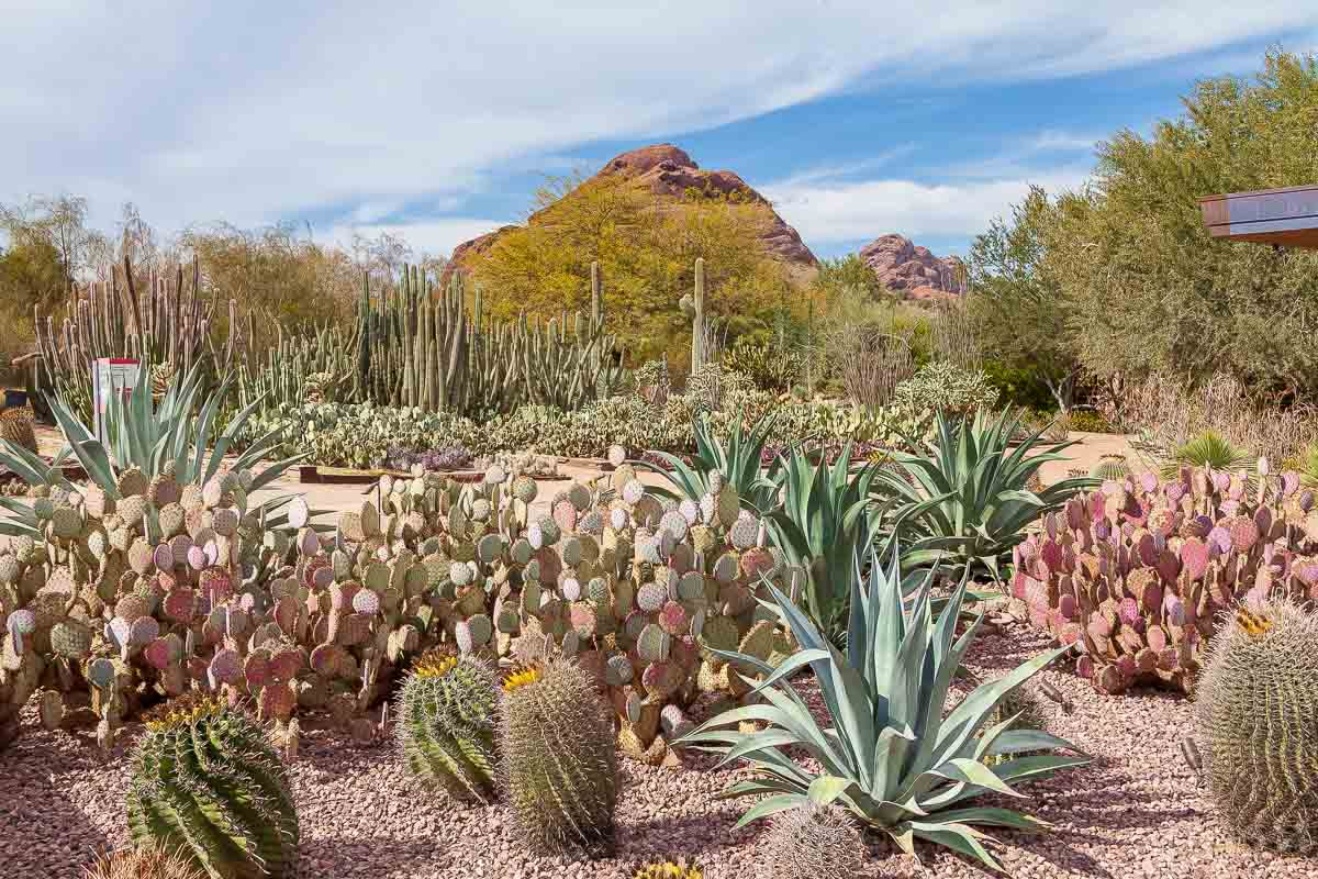 The flowers and plants at the Desert Botanical Garden in Phoenix are stunning