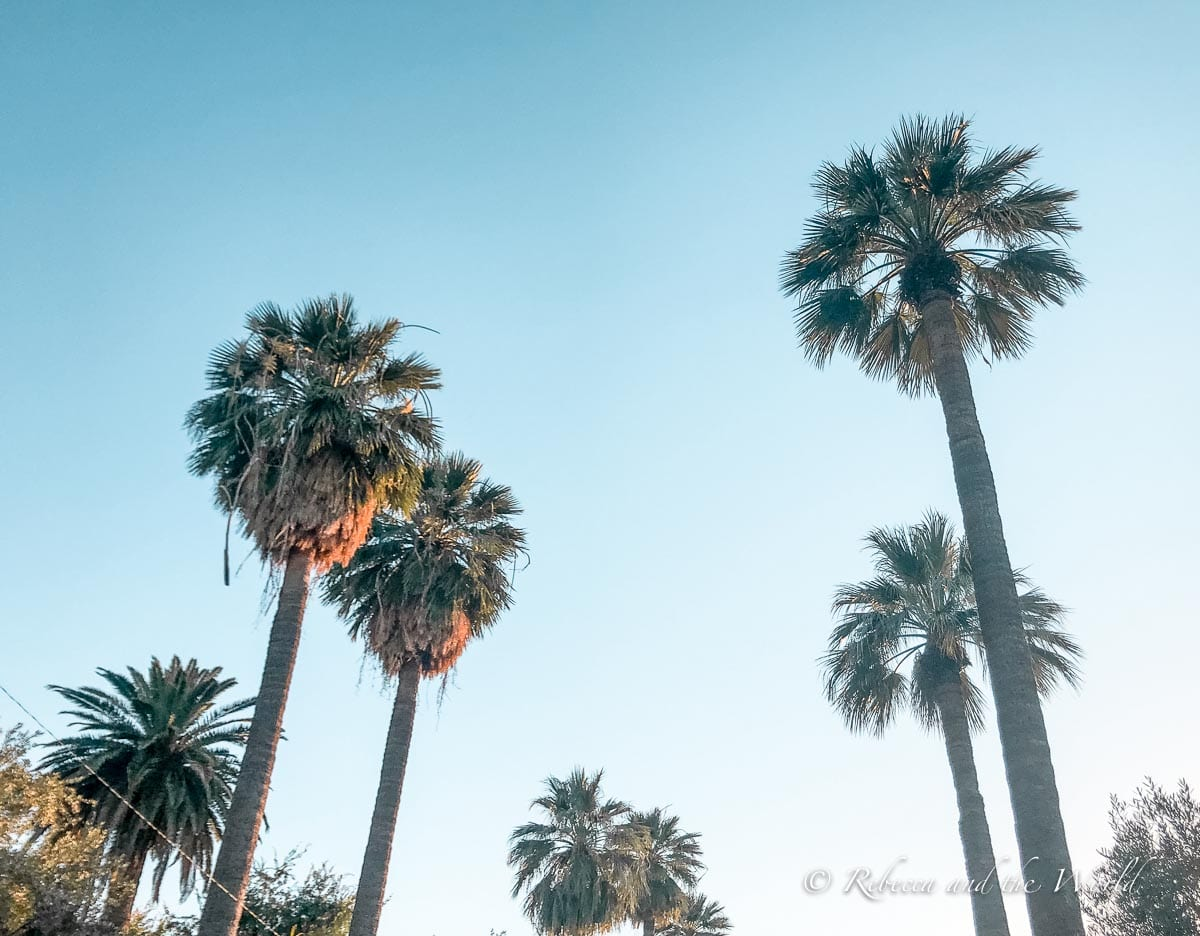 You'll see plenty of palm trees on a weekend in Phoenix!