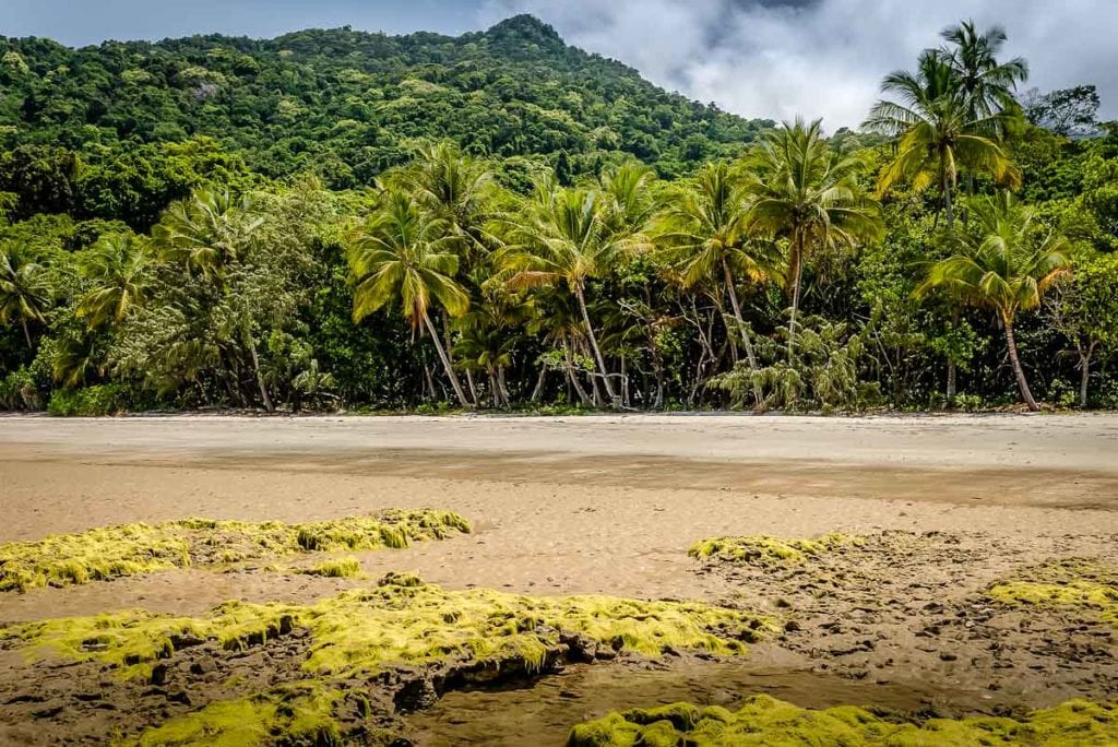 The Daintree Rainforest is one of the oldest forests in the world - it's also the only place in the world where to World Heritage Listed sites meet