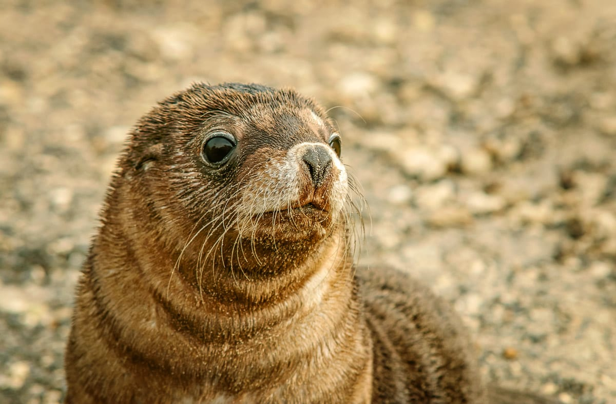 As well as kangaroos, you'll see seals and other wildlife on Kangaroo Island in South Australia, one of the most beautiful places to visit in Australia for a weekend