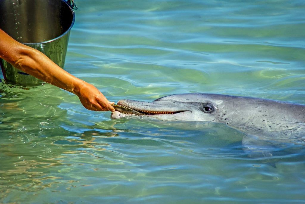 You can hand feed dolphins (under strict government regulations and supervision) in Monkey Mia in Western Australia