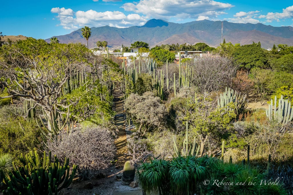 The botanical gardens is one of the best Oaxaca attractions