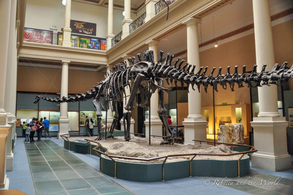 The museum in La Plata has hundreds of bones from dinosaurs and other animals that have been discovered in Argentina