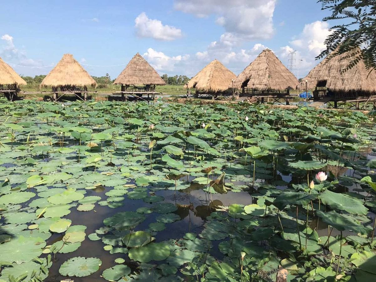 The Lotus fields in Cambodia are one of the most beautiful places to visit in Cambodia, say expats Tanya and Andy Korteling