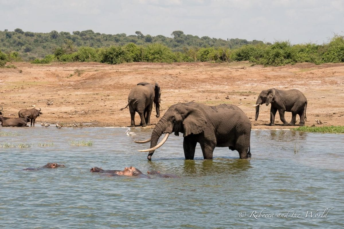 You'll see plenty of elephants and hippos on a boat tour of the Kazinga Channel in Uganda