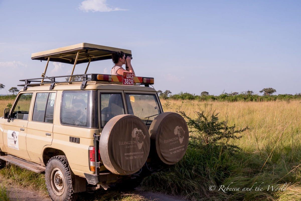 A Uganda safari is a great experience to see wildlife