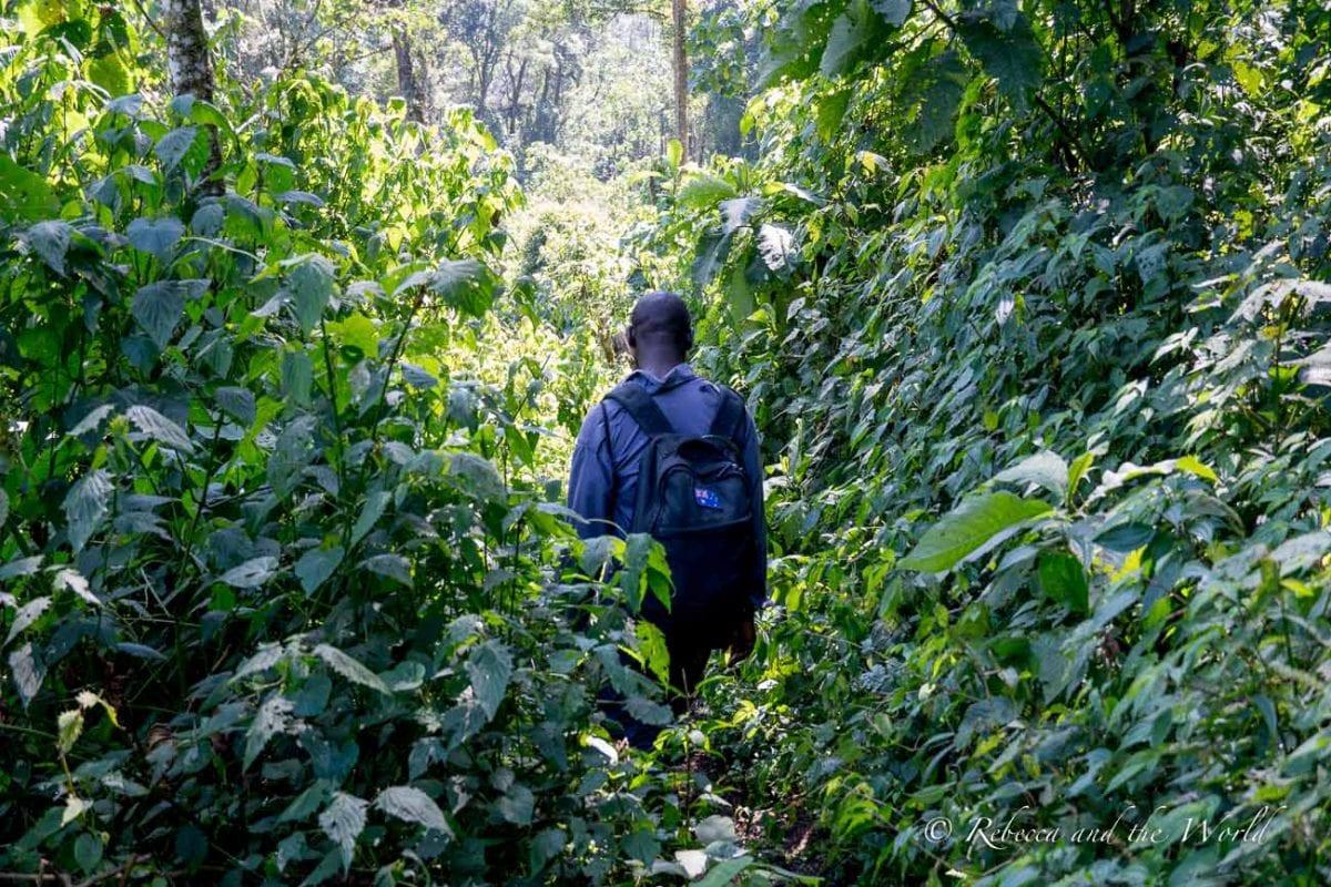 You can hire a porter to carry your backpack during gorilla trekking in Uganda - it provides local employment as well