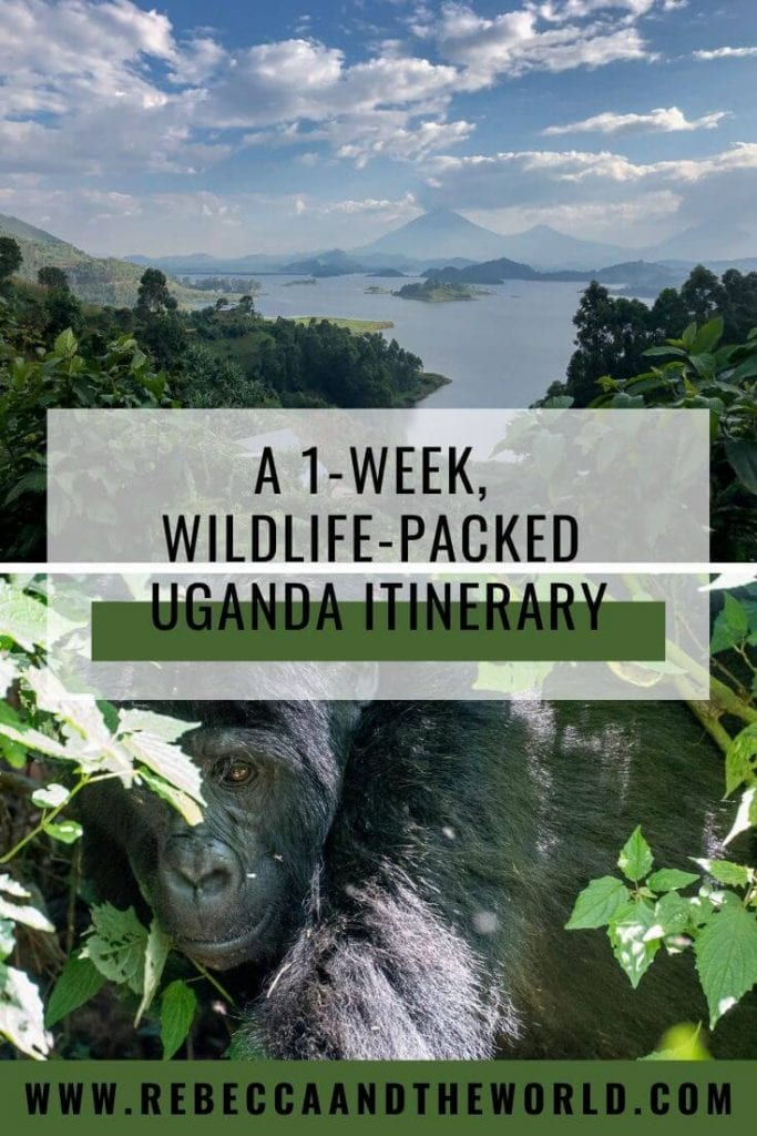 Known as the Pearl of Africa, Uganda is famous for gorillas, chimpanzees, tree-climbing lions and dazzling birds. Here's a one-week wildlife-packed Uganda itinerary, along with other recommendations for things to do in Uganda. | #uganda #ugandaitinerary #eastafrica #africatravel #safari #wildlife #gorillatrekking