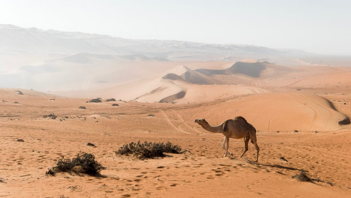 Oman is a fascinating mix of tradition and modern, and one of my dream travel destinations