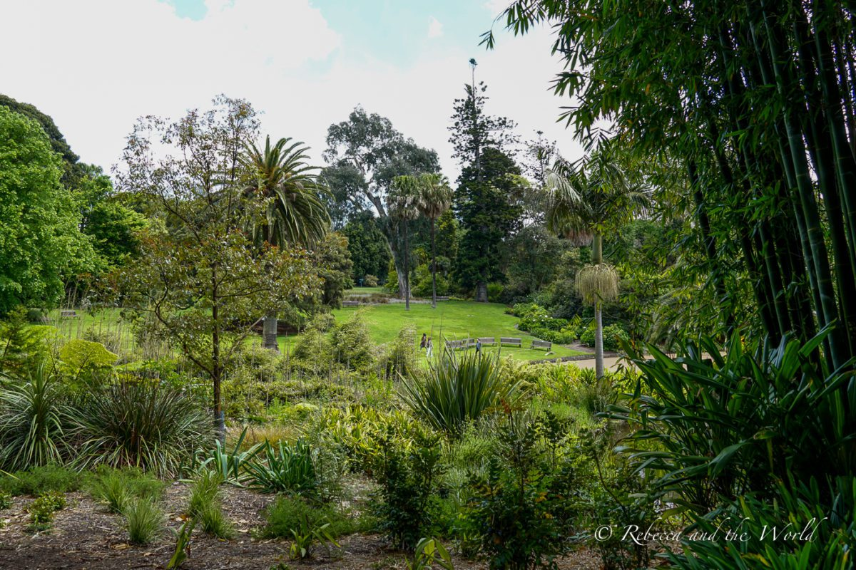 The Royal Botanic Gardens is one of the most beautiful and relaxing places to visit in Melbourne