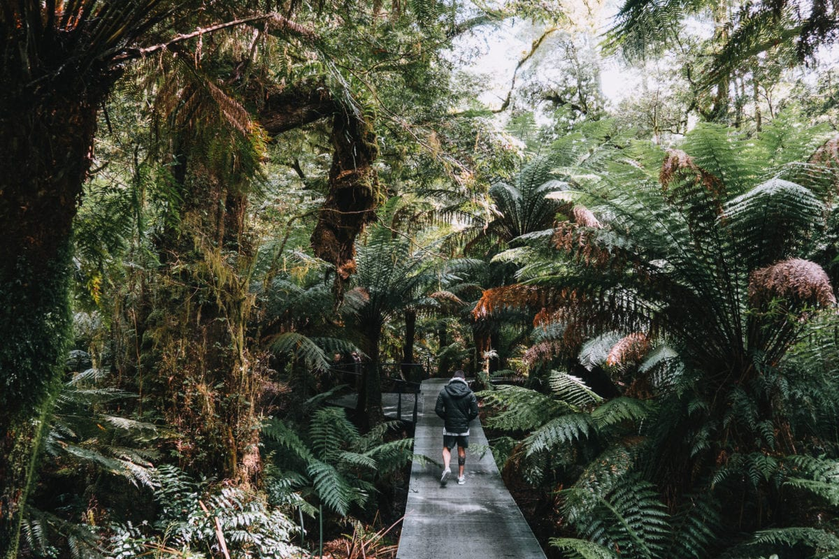 The Maits Rest Rainforest Walk is one of the best hikes along the Great Ocean Road