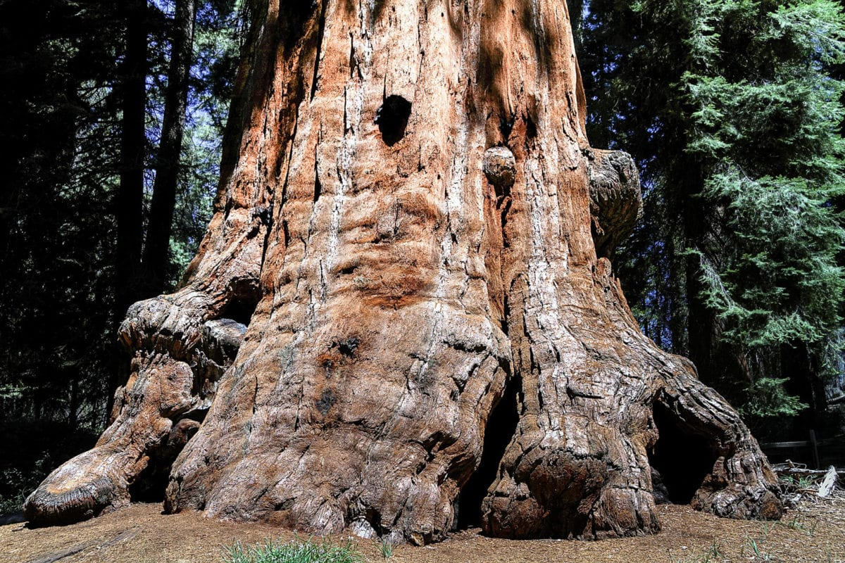 Stand under the enormous sequoia trees in Sequoia National Park in California