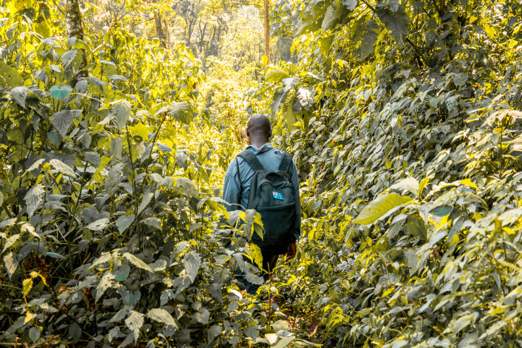 Gorilla trekking isn't easy - there are often steep, muddy paths that are overgrown, so you need to be prepared