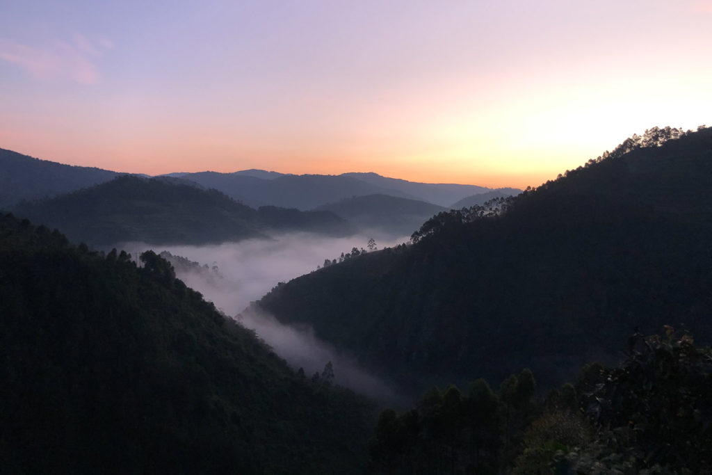 The mist over the valley early in the morning in Uganda's Bwindi Impenetrable National Forest